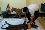 Polda Sumbar tangkap dua pelaku jual beli organ tubuh binatang langka