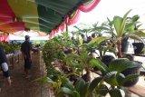 Komunitas Bonsai Kelapa siap pecahkan rekor Muri