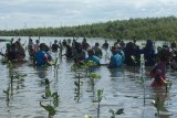 Tanam 15 ribu bibit mangrove peringati HKBN