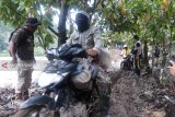Petani kakao di Sigi keluhkan hasil panen turun drastis