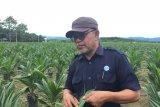Perusahaan sawit PT UWTL replanting 350 ha tahun ini