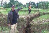 Korban Pergeseran Tanah Jual Ternaknya Harga Murah