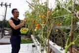 DKP Kota Makassar gelar pembinaan program pangan produktif