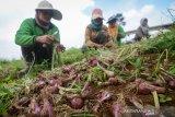 Kelompok tani dapat bantuan bibit bawang merah