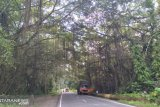 BKSDA Sumbar berkomitmen jadikan rimbo panti destinasi, luasnya 571,5 hektare