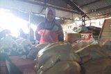 Harga daging di Kupang diperkirakan stabil sampai Lebaran