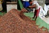 Harga komoditas perkebunan di Kendari bervariasi
