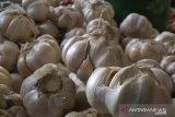 Bulog NTB tidak datangkan bawang putih impor