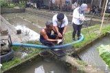 Pemkab: ibu rumah tangga diberi pelatihan pengolahan hasil laut