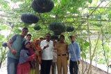 Pemkab Rohil terus kembangkan sektor pertanian dan perkebunan