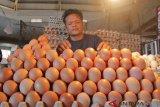 Harga telur ayam melonjak naik menjadi Rp55.000/rak