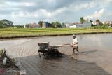 Petani rawan terserang leptospirosis