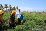 TPID DIY gagal pantau distributor bawang karena pedagangnya kabur