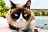 Kucing selebgram ini mati karena komplikasi