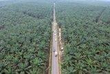 Foto udara jalur alternatif mudik lintas barat Jambi-Sumbar di Petajen, Bajubang, Batanghari, Jambi, Senin (20/5/2019). Jalur lintas barat yang menghubungkan Kota Jambi-Muarojambi-Batanghari tersebut dapat digunakan pemudik dari arah Kota Jambi menuju Padang, Sumatera Barat atau sebaliknya untuk mempersingkat waktu tempuh, namun perlu meningkatkan kewaspadaan utamanya pada malam hari karena melintasi perkebunan dan minim lampu penerangan jalan. ANTARA FOTO/Wahdi Septiawan/foc.