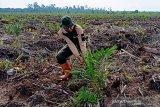Begini Perjuangan BBKSDA Riau hancurkan ratusan sawit di Cagar Biosfer