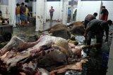 Tim gabungan Kota Magelang razia penjualan daging