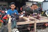 Harga ayam melonjak jelang Lebaran 1440 H