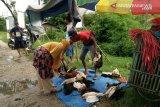 Di Kendari, harga ayam kampung melonjak 100 persen pada H-1 Lebaran
