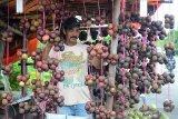 Pedagang menata buah manggis (Garcinia mangostana) yang dipasarkan di pinggir jalan nasional, Desa Ulee Glee, Kabupaten Pidie Jaya, provinsi Aceh, Kamis (6/6/2019). Sehubungan musim buah manggis di daerah itu persediaan melimpah dengan harga penawaran buah maggis Rp8.000 hingga Rp10.000 per ikat. (Antara Aceh/Ampelsa)