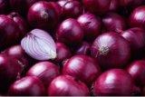 Lawan pilek hingga kanker payudara dengan bawang merah