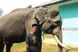 Mereka berlebaran  bersama gajah