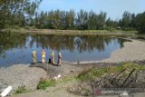 Satu ton ikan Laguna Trisik Kulon Progo mati diduga akibat limbah udang