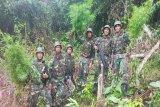 Satgas Yonif 126/KC menemukan ladang ganja di perbatasan RI-PNG