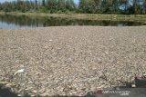 Pengunjung Laguna Pantai Trisik anjlok drastis akibat bau busuk bangkai ikan
