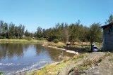 Kulon Progo kubur bangkai ikan di Laguna Trisik