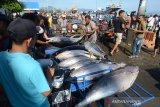 Nelayan memuat ikan tuna sirip kuning (Thunnus albacares) kualitas ekspor di Pelabuhan Perikanan Samudera Lampulo, Banda Aceh, Kamis (13/6/2019). Para nelayan di daerah itu menyatakan harga ikan tuna sirip kuning untuk pasar ekspor di tingkat pedagang lokal mengalami kenaikan dari Rp50.000 menjadi Rp55.000 perkilogram. (Antara AcehAmpelsa)