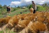Mendes memuji pertanian berbasis pariwisata di Tabanan