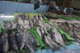 Pedagang menunggui ikan laut jualannya yang didatangkan dari Probolinggo dan Lumajang di Pasar Besar, Malang, Jawa Timur, Sabtu (15/6/2019). Kurangnya pasokan ikan laut dalam beberapa terakhir akibat gelombang tinggi membuat pedagang ikan setempat terpaksa mendatangkan ikan laut dari luar kota. Antara Jatim/Ari Bowo Sucipto/zk.