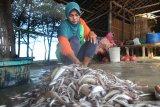 Warga menyiapkan ikan untuk dibelah di pantai Tanjung, Pamekasan, Jawa Timur, Sabtu (15/6/2019). Lebih dari sepekan produksi ikan di daerah itu turun dari biasanya 500 kg - 1.000 kg per hari per nelayan  menjadi sekitar 50 kg hingga 75 kg karena sejumlah nelayan belum melaut sejak H-3 Ramadhan 1440 lalu. Antara Jatim/Saiful Bahri/zk.