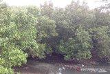 Pemda Kepulauan Sangihe minta masyarakat jangan rusak hutan bakau