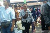 Peternak merugi akibat anjloknya harga ayam