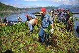 TNI AL bersih-bersih eceng gondok Danau Tondano