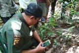BKSDA Sumsel tidak temukan jejak harimau terkam petani