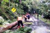 Pohon tumbang, Arus jalan Pasaman Barat-Bukittinggi sempat terganggu di Kelok 4