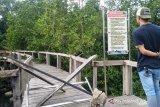 Trek mangrove Pariaman lapuk, dua wisatawan terjatuh