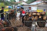 Harga TBS anjlok, petani kelapa sawit terancam miskin