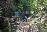 Hutan Rimbang Baling kini dijaga pengawal adat Dubalang