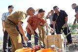 Korea gandeng ACT bangun hunian korban bencana Sigi