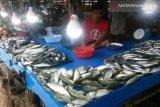 Cuaca ekstrem, Harga ikan laut di pasaran naik drastis