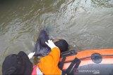 Tim SAR temukan mayat hanyut di Sungai Tanggi Kampar