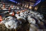 KPPU selidiki adanya potensi pelanggaran pasar ayam
