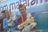 BKIPM Mataram menyelamatkan sumber daya lobster Rp17,9 miliar
