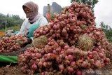 Bulog NTT beli 3,8 ton bawang merah dari petani