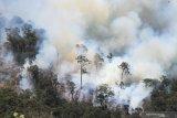 Akademisi: Masih ada niat buka lahan dengan membakar