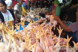 Harga ayam potong melambung hingga Rp29.000/kg di Pekanbaru